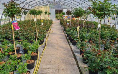 Vente d'arbustes près de Nancy pour votre jardin