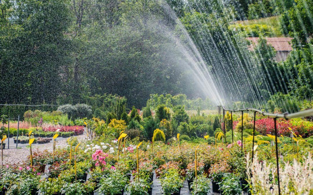 Vente de plantes près d'Épinal : des passionnés à votre service !