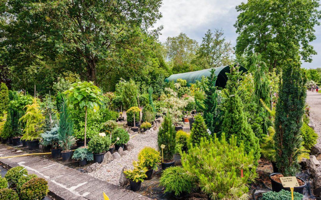 Vente d'arbuste près de Lunéville : les plantes topiaires pour décorer votre jardin