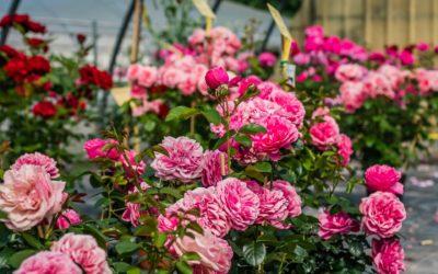 Producteur de plantes près de Lunéville : aménagez autrement vos espaces extérieurs